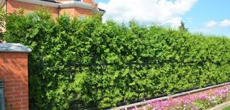 Hedge Vs Fence Pros Cons Comparisons And Costs