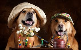 Wallpaper Two dogs, flowers, hat, funny animals 1920x1200 HD ...
