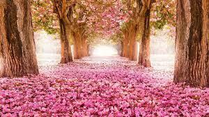 top 40 prettiest flowers wallpapers