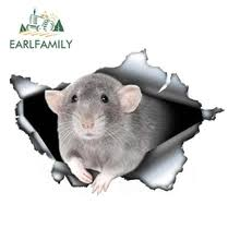 Best Value Car Rat Sticker Great Deals On Car Rat Sticker From Global Car Rat Sticker Sellers Wholesale Related Products Promotion Price On Aliexpress