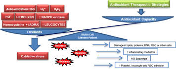 oxidative stress in sickle cell disease