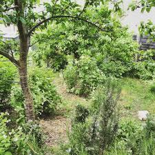 forest garden