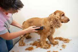 how to use dog clippers dog grooming