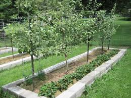 fruit trees in raised beds square foot
