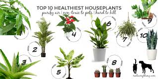 top 10 healthiest houseplants purify