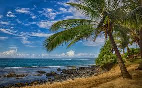 تحميل خلفيات النخيل جزيرة استوائية المحيط الساحل موجة عريضة