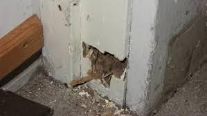 40+ Termite Repair Cost  Pictures