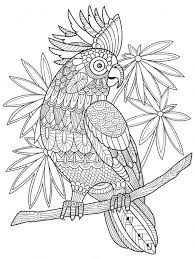 Parrot Zentangle Coloring Page Kleurplaten