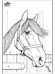 Paard 7 Kleurplaten Paarden