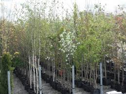garden trees ireland trees