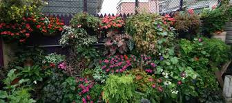 choosing plants for shade garden