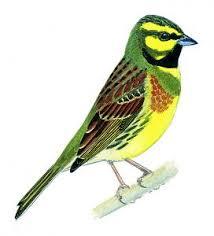 Apprendre à reconnaitre les oiseaux, les astuces pour reconnaitre ...