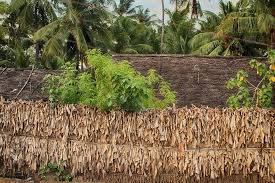 Natural And Living Fences Thannal Mud Homes Trust