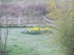 Spring Renewal A Short Story My French Country Home