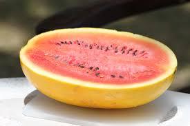 البطيخ الأصفر التصوير Photo Sales Com