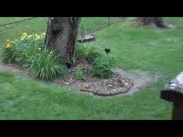 Mvi 5047 Erosion During Torrential Rains Along The Western Fence Line In My Backyard Youtube