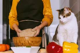 how to cook en for cats 5 easy