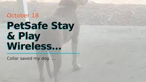 Petsafe Stay Play Wireless Fence For Stubborn Dogs From The Parent Company Of Invisible Fen Youtube