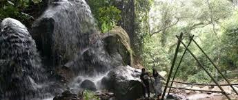 indahnya hutan pinus ask forest pacet mojokerto wisata camping keren