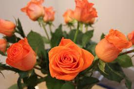 صور لـ باقة أزهار إزهار زهور البرتقالي ورود اللون