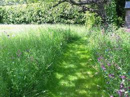berkshire garden into wildflower meadows