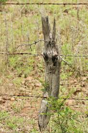 Fence Post With A Face Free Stock Photo Public Domain Pictures