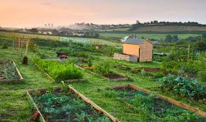 alan titchmarsh s tips on starting your