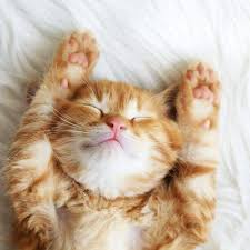 قطط جميلة Home Facebook