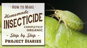 how to make homemade insecticide