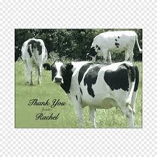 الماشية الألبان العجل دعوة الزفاف الزفاف العطلات الزفاف Png