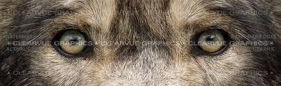 Wolf Eyes 2 Wildlife Rear Window Graphic