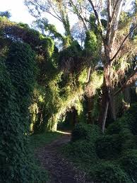 perth s secret garden west australian
