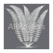 Fern (Gray & Ivory)' Stretched Canvas Print - Botanical Series |  AllPosters.com
