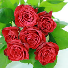 ورود الصباح الجميله اجمل صباح مع الورد عجيب وغريب