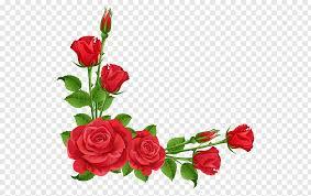 rose flower pink red flower frame free