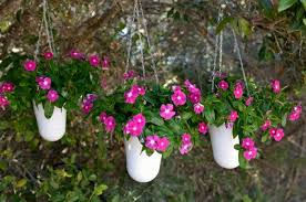container gardening in shade enjoy