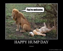 happy hump day meme images humor and funny pics