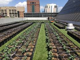 boston medical center rooftop farm