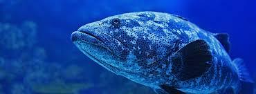 Fish Names Standard - Seafood Standards