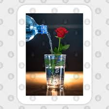 Watering The Red Rose Red Rose Sticker Teepublic