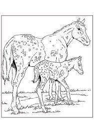 Kids N Fun Kleurplaat Paarden Appaloosa Paarden