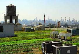 brooklyn grange rooftop garden season