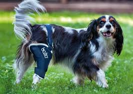 10 best dog knee braces for dogs with