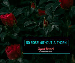 amusing roses quotes that celebrate life s beauty
