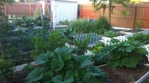 grow a garden of vegetables in florida