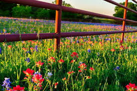 A Texas Landowner S Guide To Fence Law Fredericksburg Realty