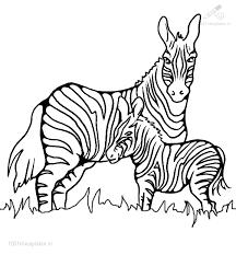 1001 Kleurplaten Dieren Zebra Kleurplaat Zebra