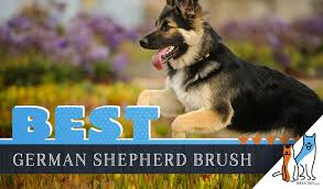 7 best brushes for german shepherds