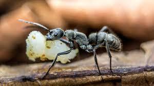 homemade ant home quicks