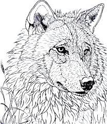 Coloring For Adults Kleuren Voor Volwassenen Wolf Head Nice